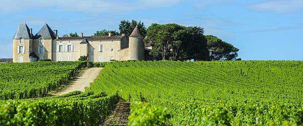 Vineyard et Château d''Yquem, Sauternes région, Aquitaine, France - Photo