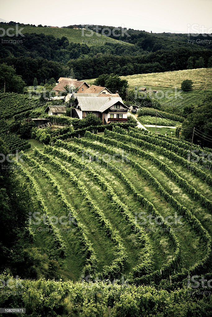 Vineyard and Farmhouse in Countryside royalty-free stock photo