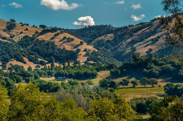 Vineyard and Hills, El Dorado County, California stock photo