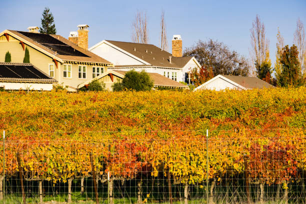 Vineyard and houses on a warm afternoon light, Livermore, east San Francisco bay area, California Vineyard and houses on a warm afternoon light, Livermore, east San Francisco bay area, California alameda california stock pictures, royalty-free photos & images