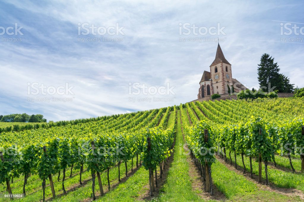 vineyard and medieval church in Alsace, France - foto stock