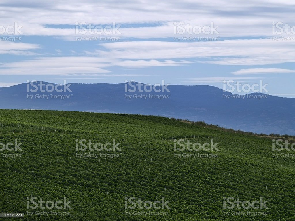 Vineyard and mountains royalty-free stock photo