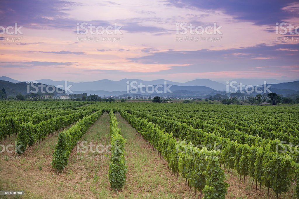 Vineyard and rolling hills in french countryside at sunset stock photo