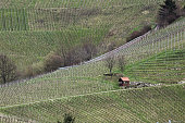 Vineyard and small hut in Baden-Wurttemberg, Germany.