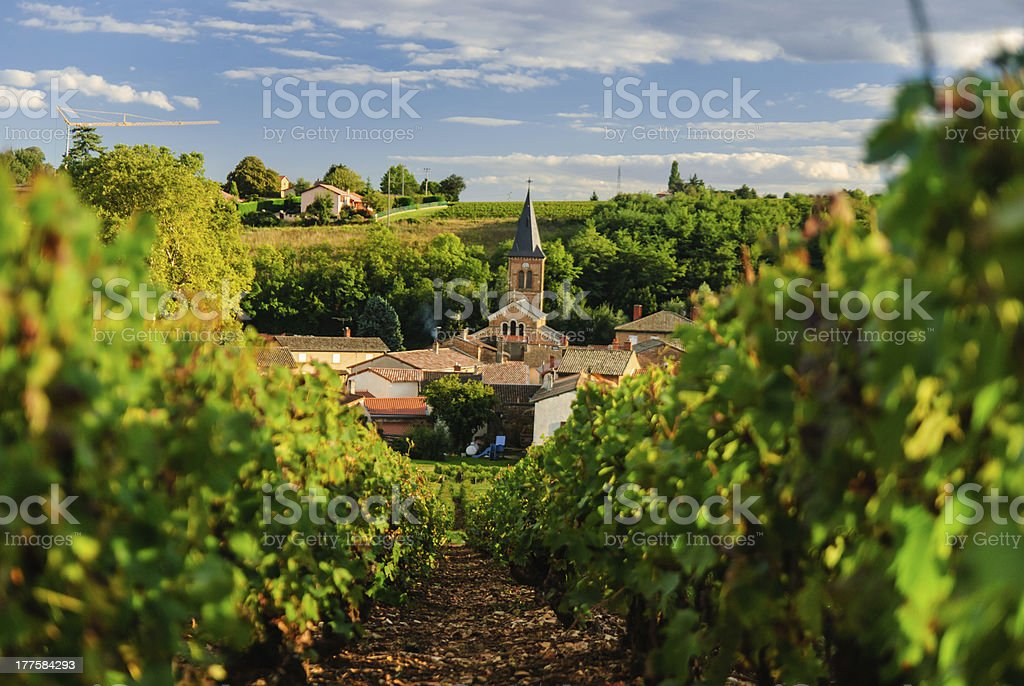 Vineyard and the town of Saint Julien, region Beaujolais, France stock photo