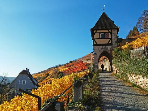 Vineyard and tower in Esslingen