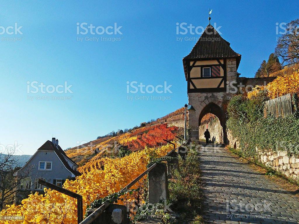 Vineyard and tower in Esslingen stock photo