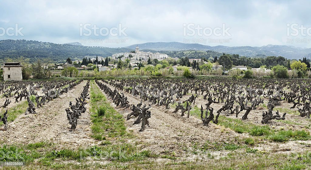 Vineyard and village in Provence, France stock photo