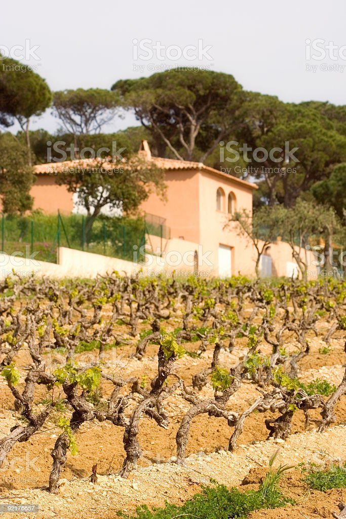 vineyard and winery in spring royalty-free stock photo