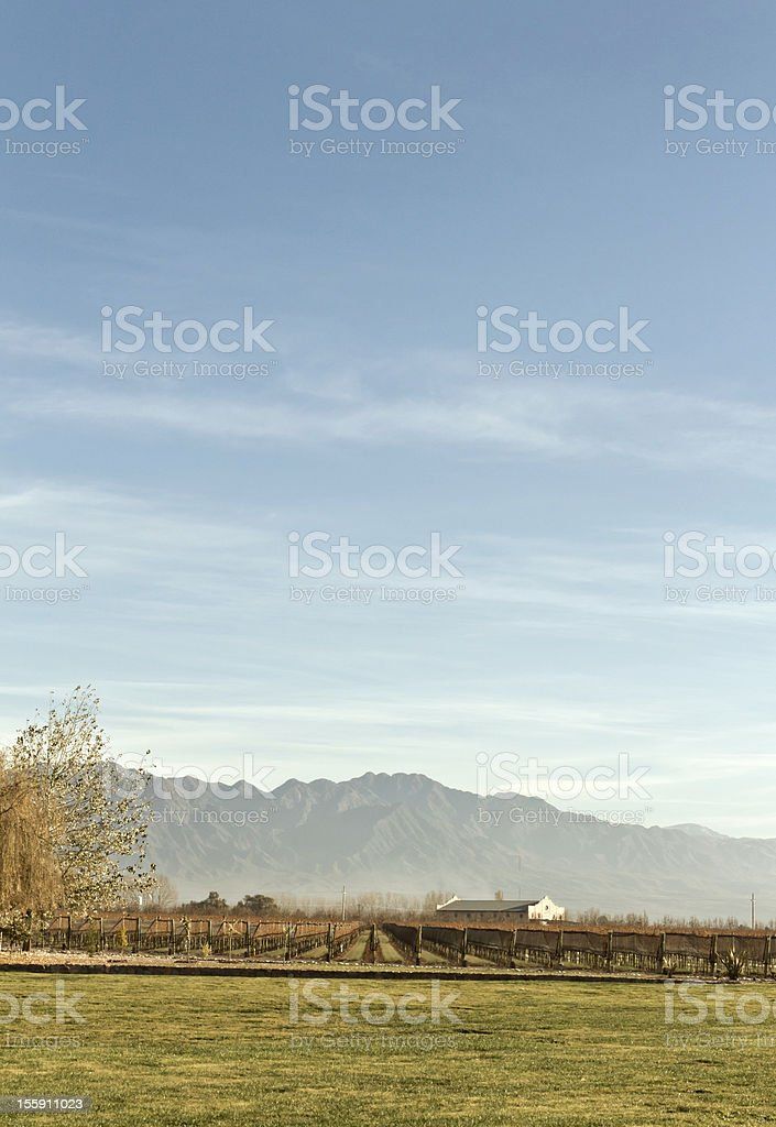 Vineyard and winery royalty-free stock photo