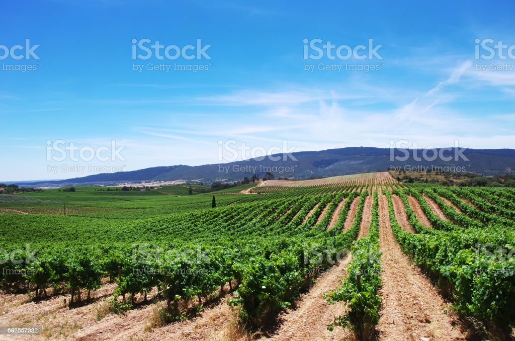 Weinberg im Alentejo-Region südlich von Portugal – Foto