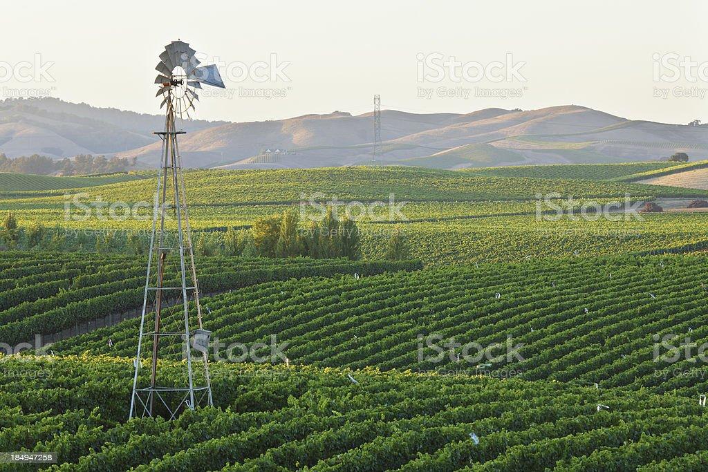 Vineyard at Dusk royalty-free stock photo