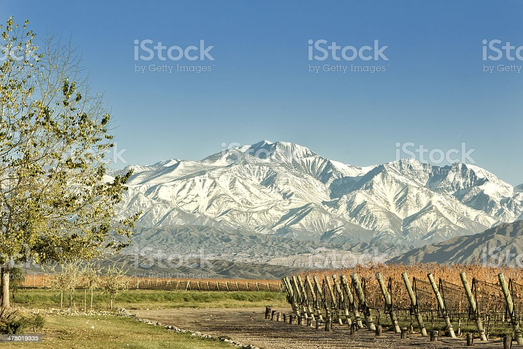 Vineyard at foot of The Andes royalty-free stock photo
