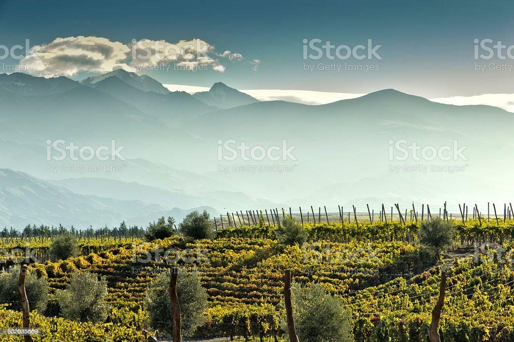 Vineyard am Fuß der Anden – Foto
