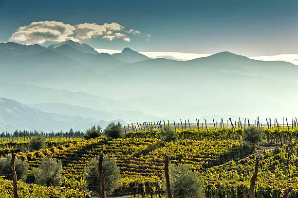 Vineyard at foot of The Andes stock photo