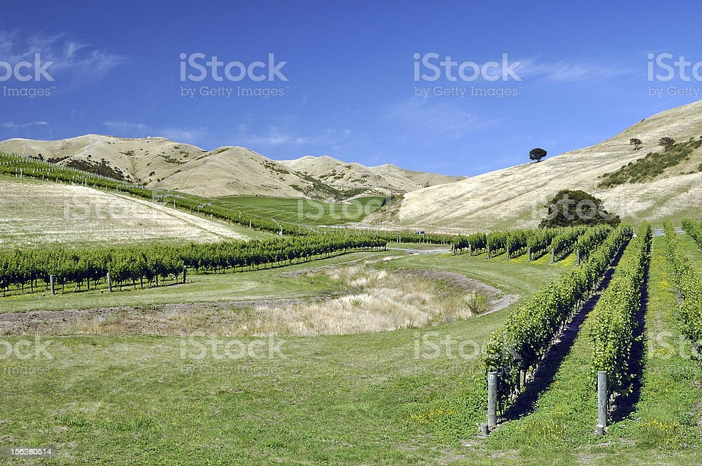 Vineyard at Marlborough hills royalty-free stock photo