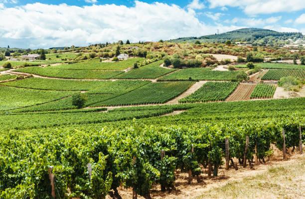 Vignoble à Solutre, Bourgogne, France - Photo