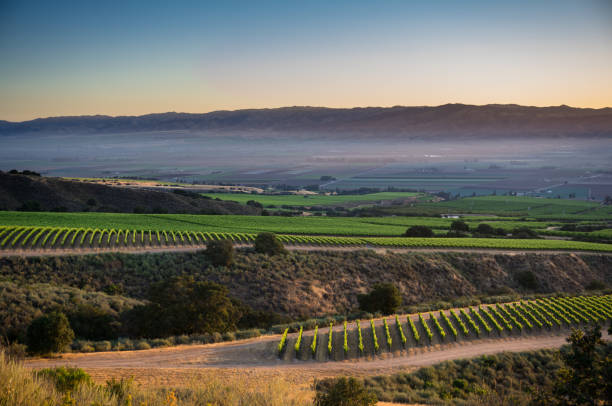 Vineyard at Sunrise in Santa Lucia Highlands stock photo