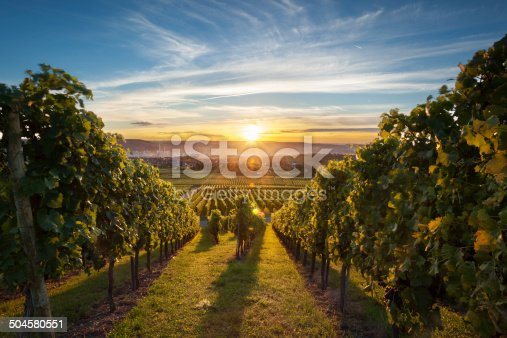 Beautiful vineyard scenery while sunset.
