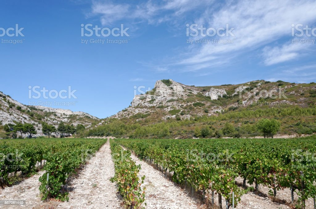Vineyard at the feet of arid hills in Southern France stock photo