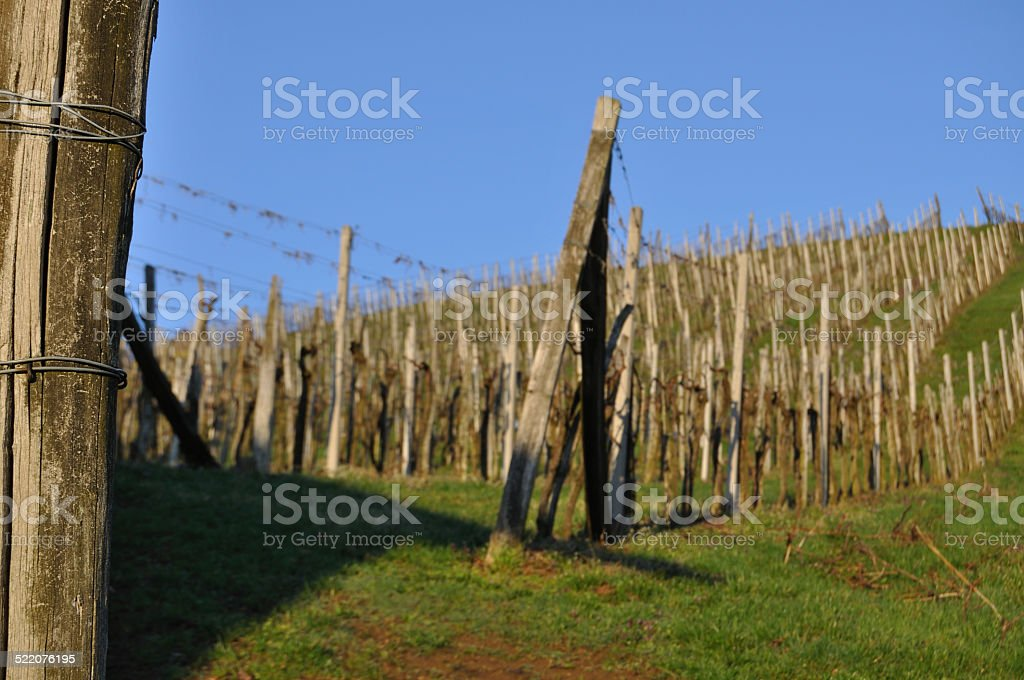 Vineyard at the Klocher wine route, Southern Styria, Austria stock photo