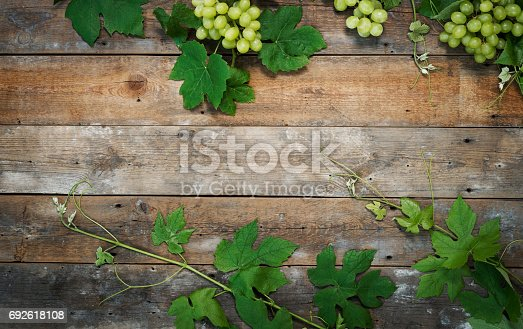 istock Vineyard background 692618108