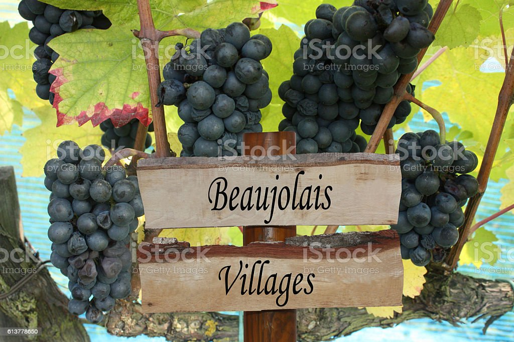 Vignoble Beaujolais villages stock photo