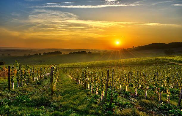 vineyard Bergerac two stock photo