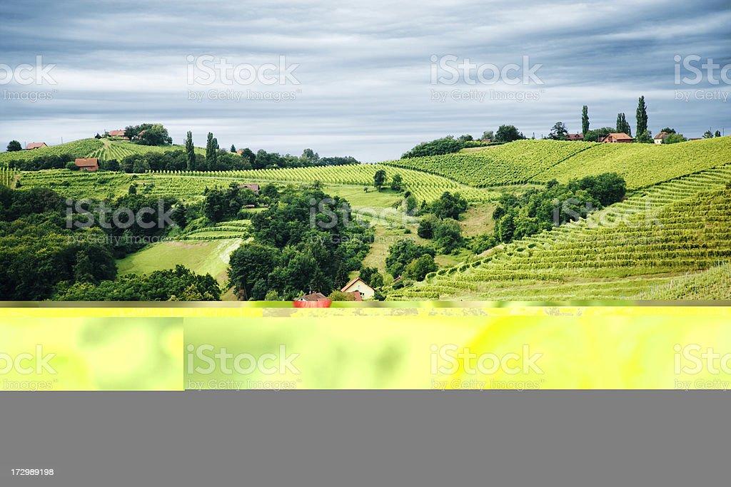 Vineyard contryside royalty-free stock photo