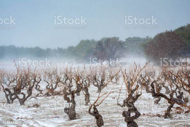 Photo of Vineyard covered in winter snow