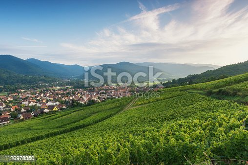vineyard just before the sunset on a nice summer evening. In the valley you see the small village Wihr-au-val.