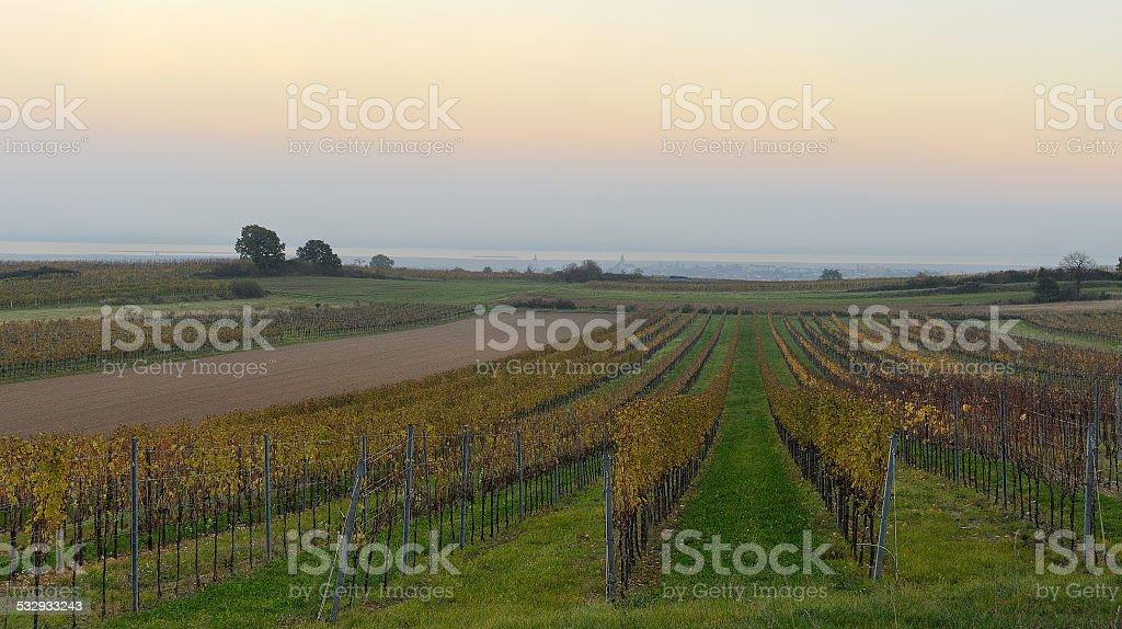 Vineyard evening in Oggau stock photo