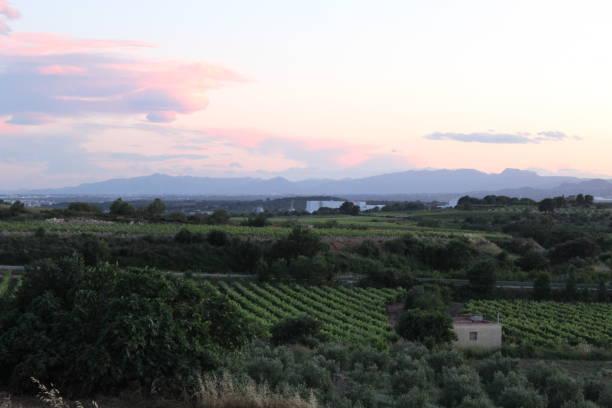 Campos de viñedo alrededor de Nulles, España - foto de stock