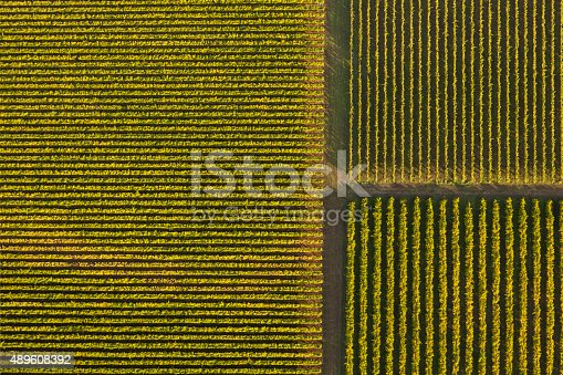 An aerial view of a vineyard. Taken from a hot air balloon,