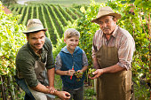 Grandfather, father and son in their vineyard. Harvesting grapes. Looking into camera. The tradition of winemaking goes from generation to generation.