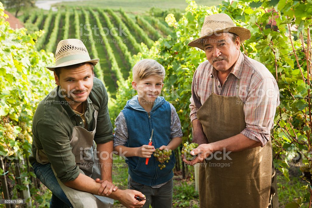 Vineyard from fathers to sons stock photo