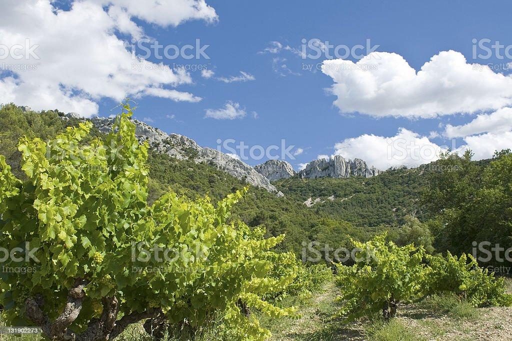 Vineyard from Gigondas. France. stock photo