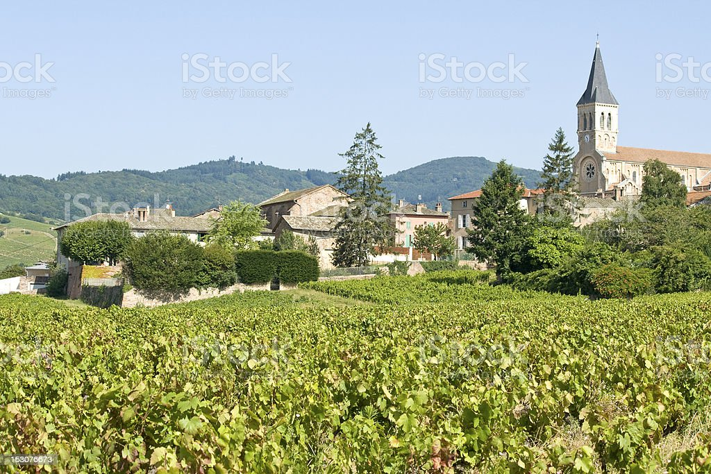 Vineyard, from Julienas a french village in Beaujolais. France. stock photo