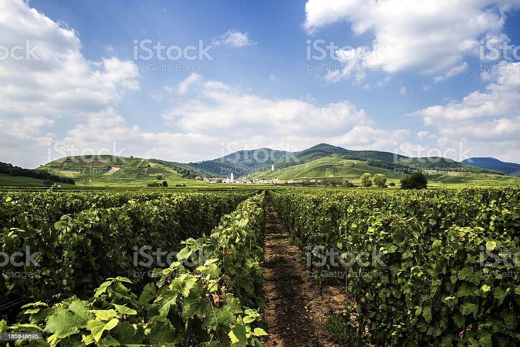 Vigneto nella Regione Alsazia, Francia - foto stock