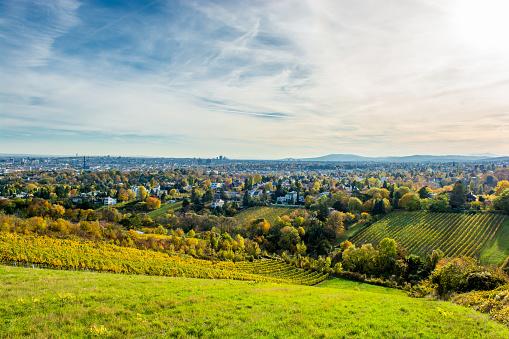 Vineyard in Autumn and the Skyline of Vienna in Austria