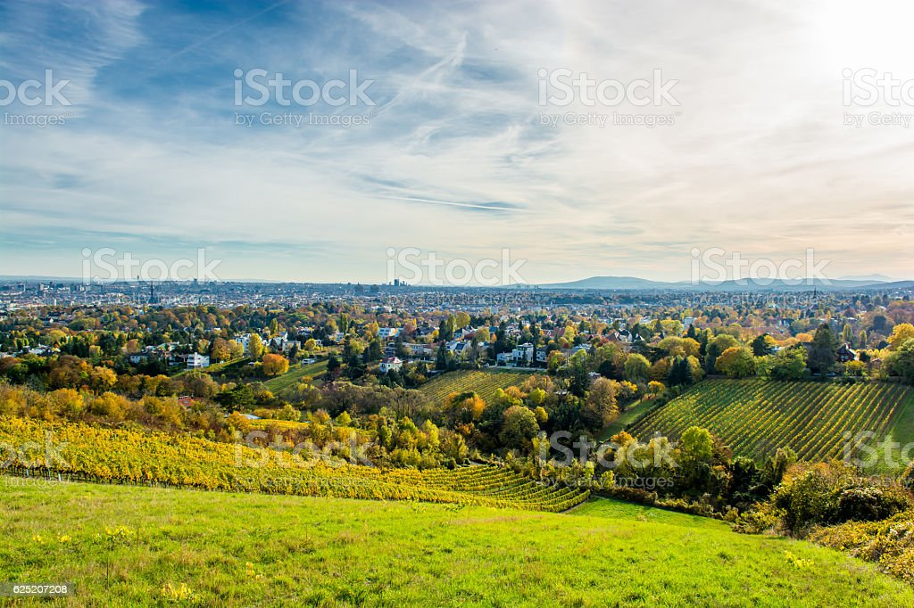 Vineyard in Autumn and the Skyline of Vienna in Austria stock photo