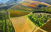 Vineyard in autumn from above, Chianti region, Tuscany, Italy
