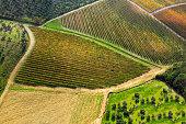 Vineyard in a foggy day in autumn, Chianti region, Tuscany, Italy
