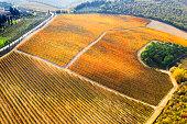 Vineyard in autumn, Chianti region, Tuscany, Italy