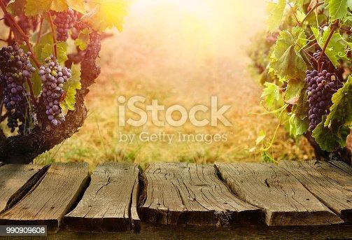 619246768 istock photo Vineyard in autumn harvest 990909608