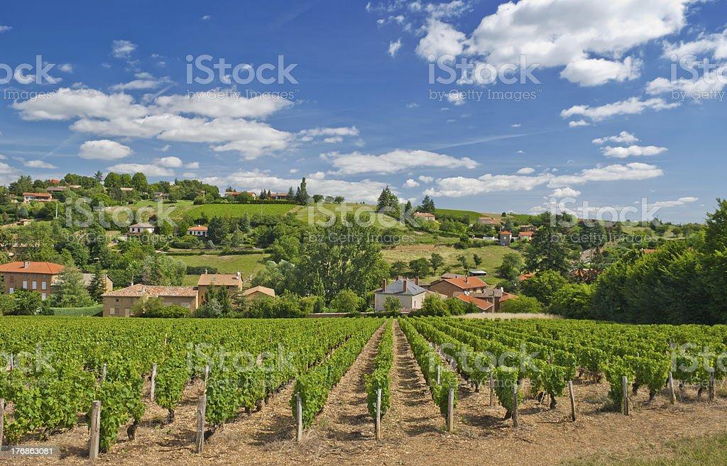 Vineyard in Beaujolais region, France stock photo