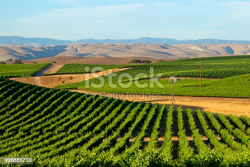 A vineyard hugs the rolling hills in California's Central Valley with the Coast Ranges in the background.