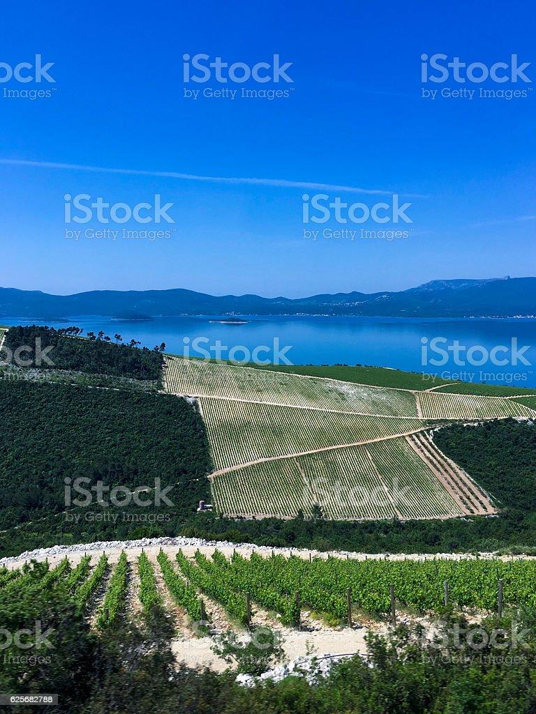 Vineyard in Dalmatian coast, Croatia ストックフォト
