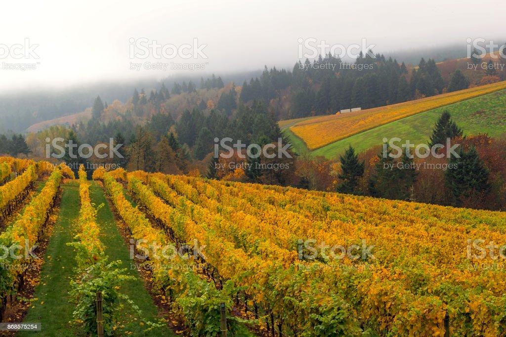 Vineyard in Dundee Oregon an einem nebligen Tag im Herbst Saison USA – Foto