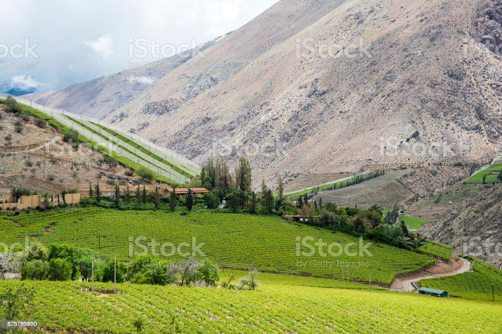 Vineyard in Elqui Valley, Atacama Desert stock photo